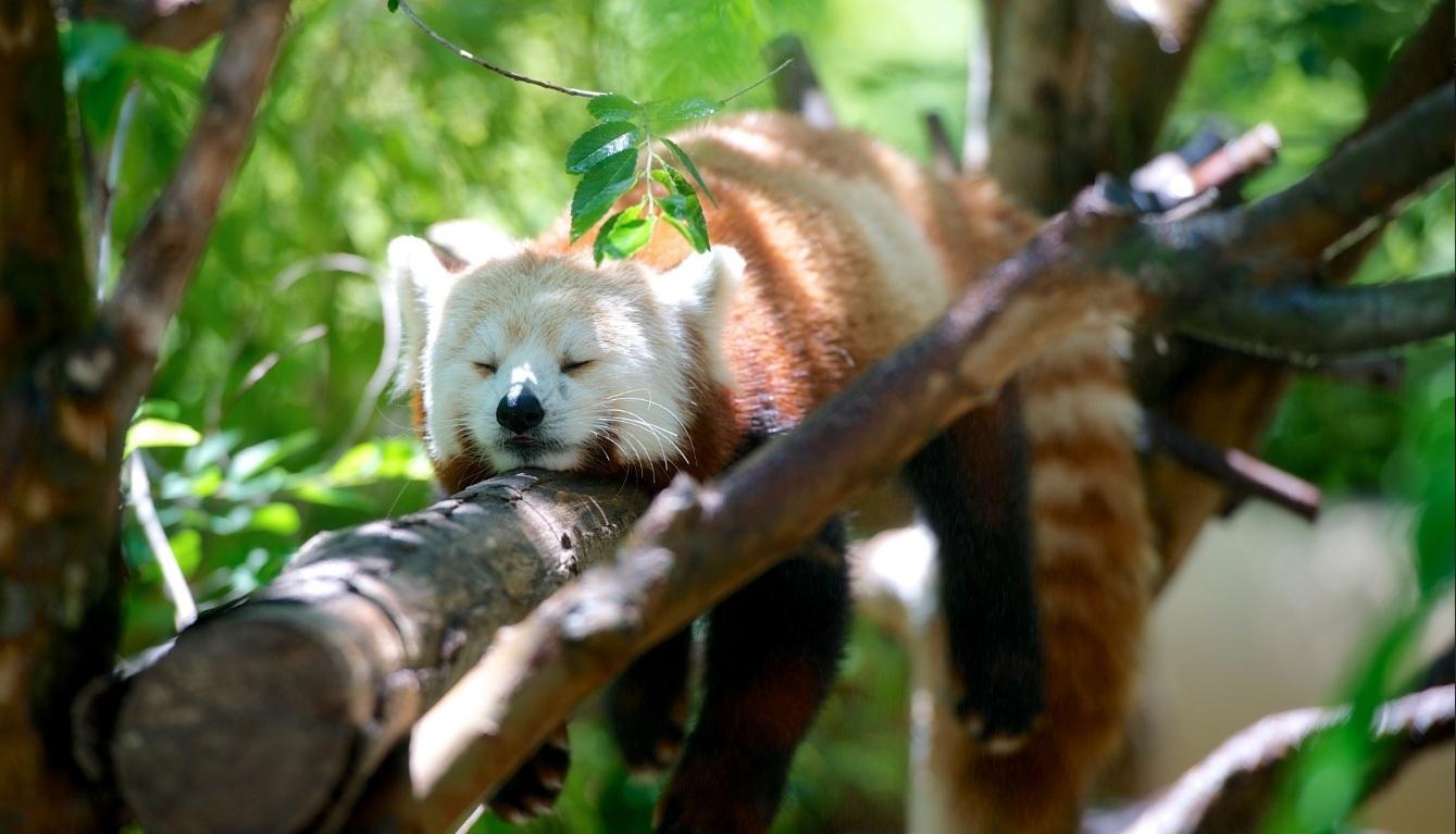 5 Ways Nature Can Help You Sleep Like A Baby